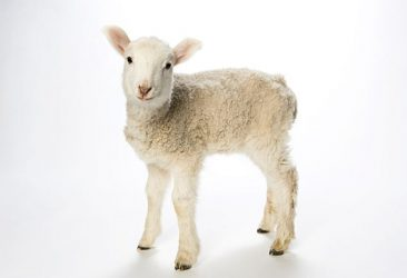 Jesus Our Passover Lamb